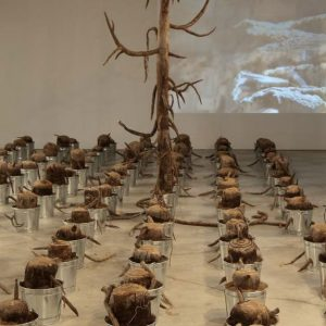 2013 'The Last Tree' Interview with Dr. Midori Yoshimoto, Ph.D. – Ragazine